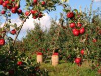 Green Deal: Verantwortung ökologischer Landbau